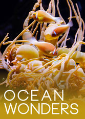 Kliknij by uzyskać więcej informacji | Netflix: Ocean Wonders | Relax and be astonished as footage from beneath the world's oceans brings coral reefs, seahorses, anemones and other undersea marvels to your screen.
