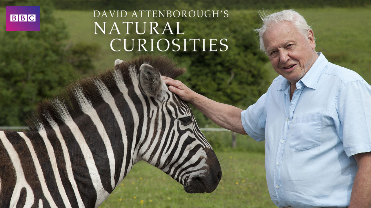 netflix-David-Attenboroughs-Natural-Curiosities