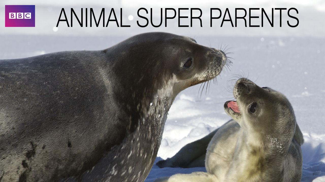 netflix-animal-super-parents