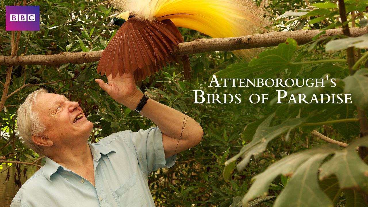 netflix-attenbofougs-birds-of-paradise