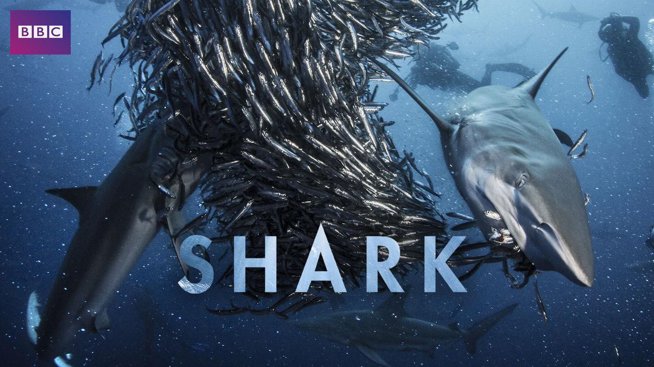 netflix-shark-bg