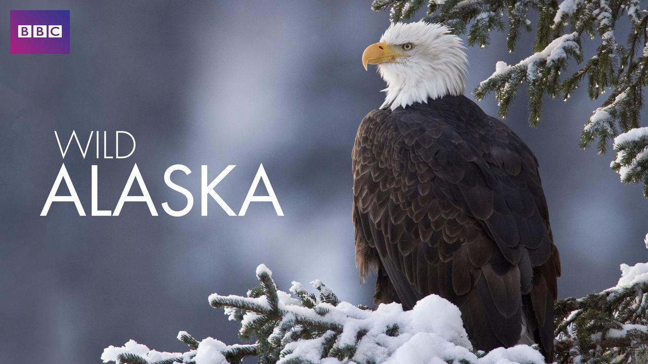 netflix-wild-alaska-bg