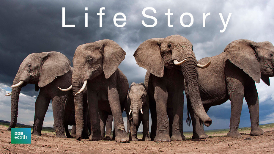 netflix-life-story-1