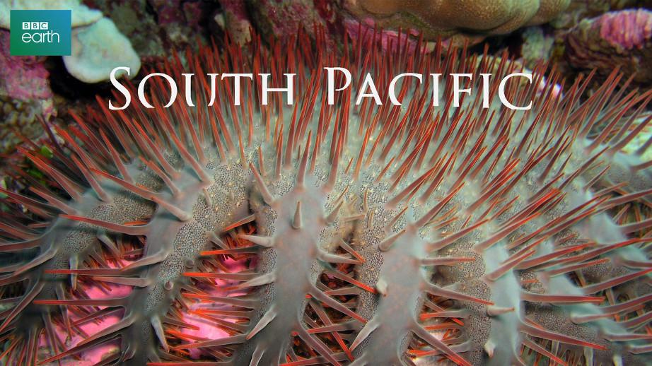 netflix-south-pacific-bg-1