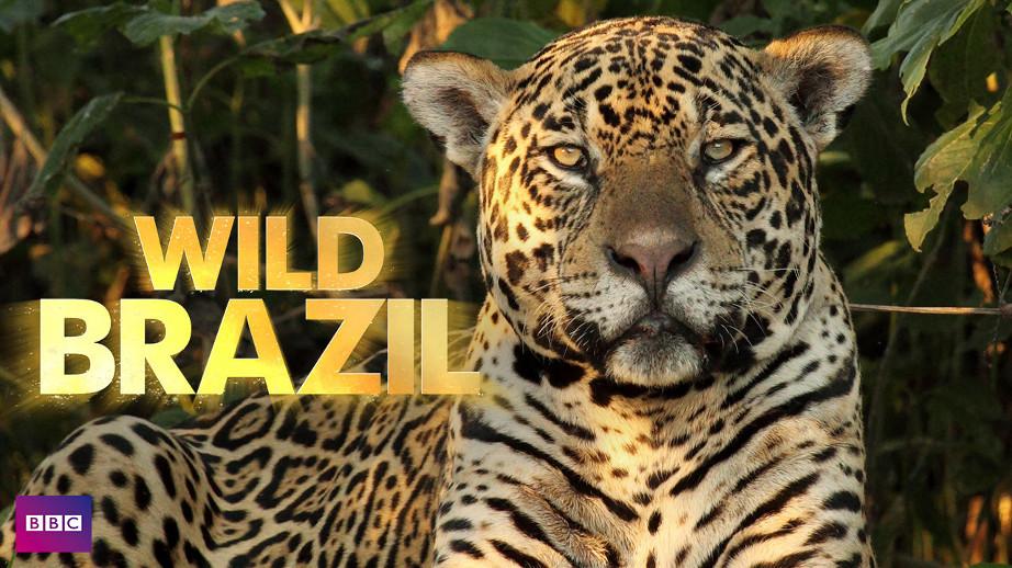 netflix-Wild-Brazil-bg-1