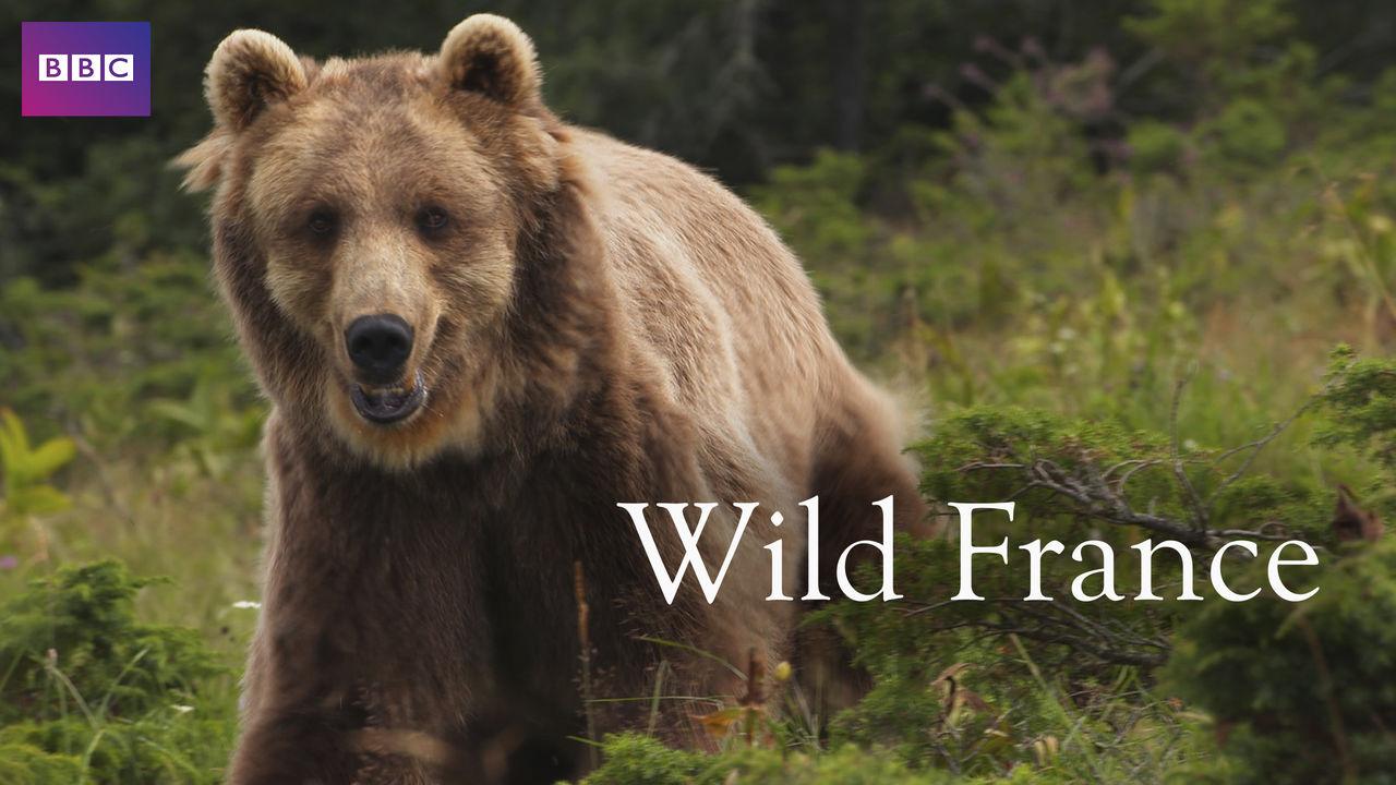 netflix-Wild-France