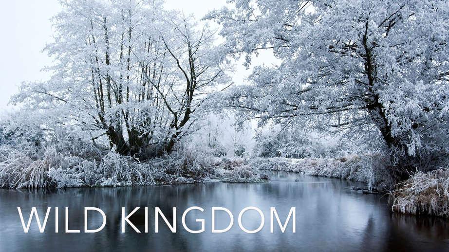 netflix-Wild-Kingdom-bg-1-1-1