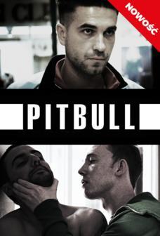 showmax-pitbull