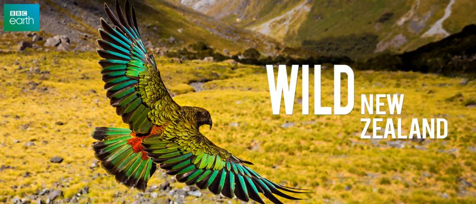 showmax-Wild New Zealand-bg